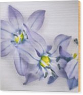 Spring Flowers On White Wood Print