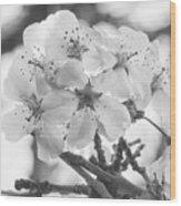 Spring Flowers - White Wood Print
