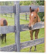 Spring Foal Wood Print