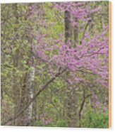 Spring Forest With Redbud Wood Print