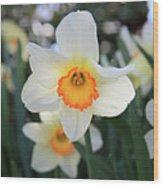 Spring Fresh Wood Print