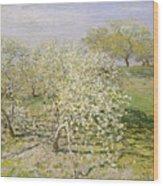 Spring. Fruit Trees In Bloom Wood Print