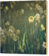 Spring Garden With Narcissus Flowers Wood Print