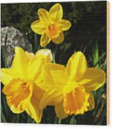 Spring Gold Wood Print