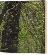 Spring Green Wood Print
