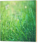 Spring Green Grass Wood Print