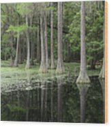 Spring Green In Cypress Swamp Wood Print