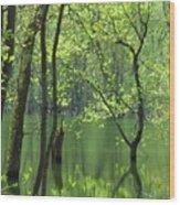 Spring Green  Wood Print by Lori Frisch