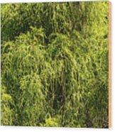 Spring Greens Wood Print