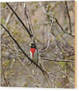 Spring Grosbeak Wood Print