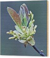 Spring Growth Wood Print