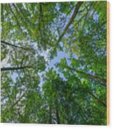 Spring Gums Wood Print