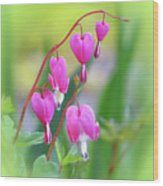 Spring Hearts - Flowers With Vignette 2 Wood Print