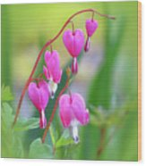 Spring Hearts - Flowers With Vignette Wood Print