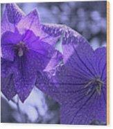 Spring Hope Wood Print