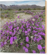 Spring In Anza  Wood Print