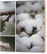 Spring In Calgary Wood Print