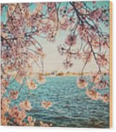 Spring In Dc Wood Print