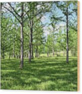 Ginkgo Grove In The Spring  Wood Print