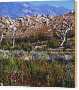 Spring In Onion Valley Wood Print