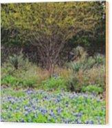 Spring In Texas Wood Print