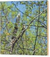 Spring In The Deep Woods Wood Print