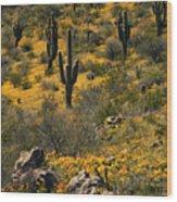 Spring In The Sonoran Desert  Wood Print