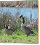 Spring In The Wetlands Wood Print