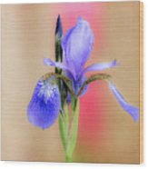 Spring Iris 2 Wood Print