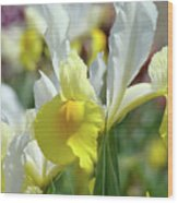 Spring Irises Flowers Art Prints Canvas Yellow White Iris Flowers Wood Print