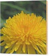 Spring Is In Bloom Wood Print
