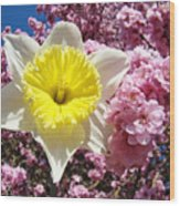 Spring Landscape Pink Tree Blossoms Yellow Daffodils Baslee Troutman Wood Print