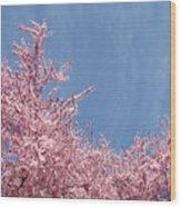 Spring Landscape Pink Trees Blossoms Blue Sky Baslee Troutman Wood Print