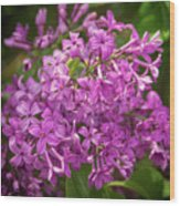 Spring Lilacs On Black Wood Print