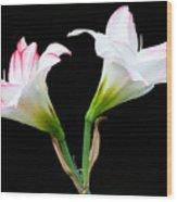 Spring Lilies Wood Print