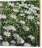 Spring Loyal Love Daisies  Wood Print