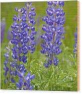 Spring Lupine Wood Print