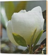 Spring Magnolia Wood Print