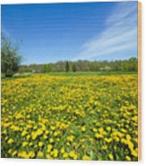 Spring Meadow Full Of Dandelions Flowers And Green Grass Wood Print
