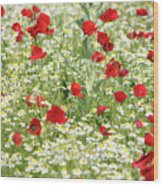 Spring Meadow With Poppy And Chamomile Flowers Wood Print