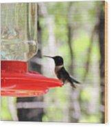 Spring Migration Hummingbird Wood Print