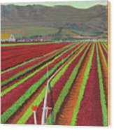 Spring Mix Lettuce Fields Wood Print
