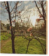 Spring Orchard In Williamsburg Wood Print