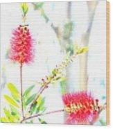 Spring Pastel Wood Print
