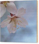 Spring Pastels Wood Print