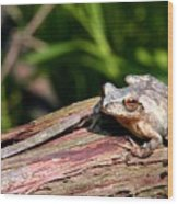 Spring Peeper Wood Print by Betsy LaMere