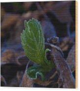 Spring Peeps Forth Wood Print