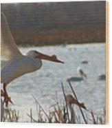 Spring Pelicans 2 Wood Print