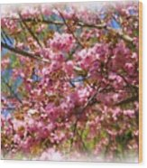 Spring Pink Blossoms Wood Print