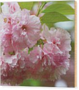 Spring Pink, Green And White Wood Print